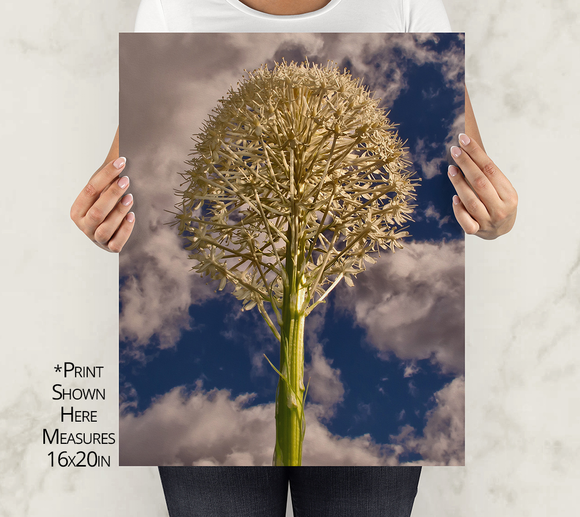 Bear Grass Close Up Print