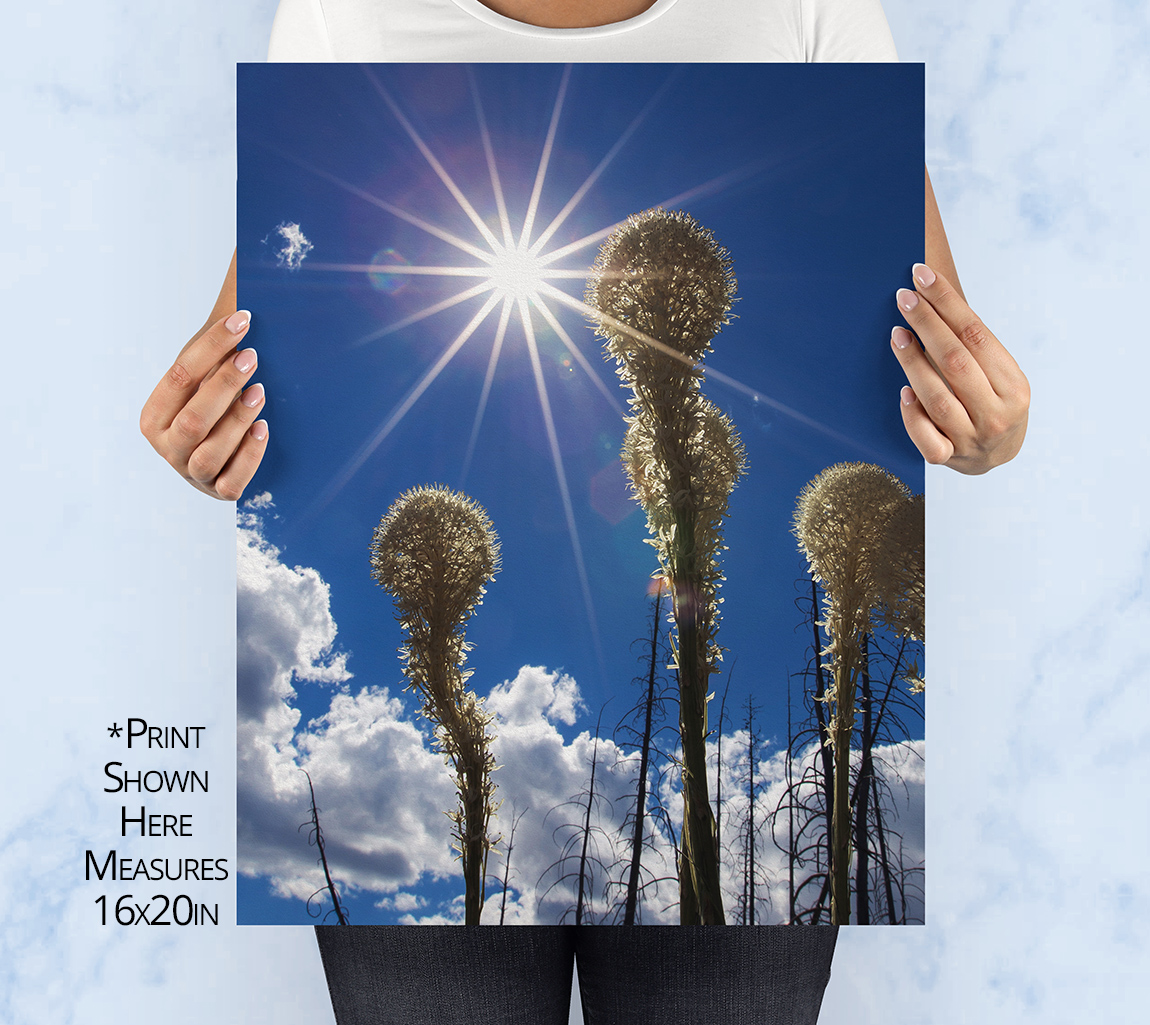 Bear Grass Sun Burst Print
