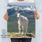 Mountain Goat on Swiftcurrent Peak Print