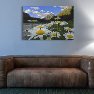 Mount Cannon and Daisies Canvas