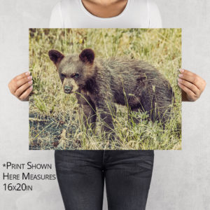 Black Bear Cub Mean Mug Photo Print