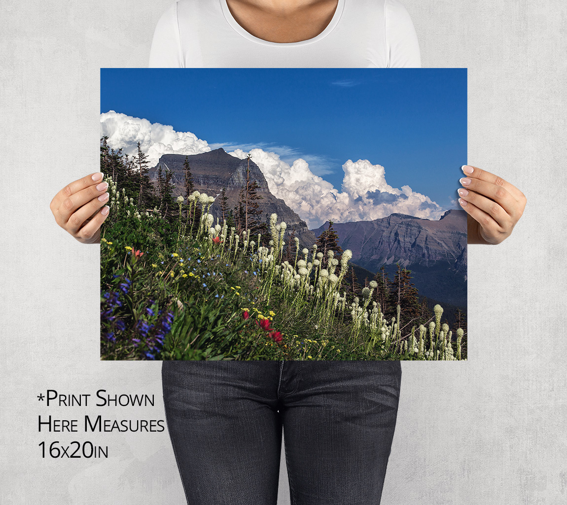 Going to the Sun Mtn and Bear Grass at Logan Pass Photo Print
