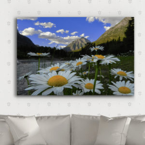 Mt Cannon and Daisies on Metal