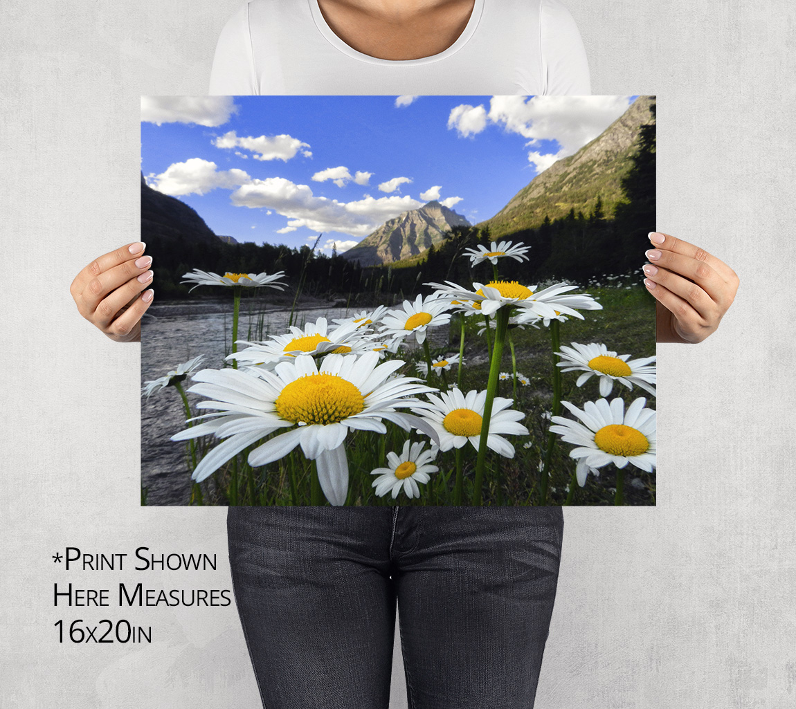 Mt Cannon and Daisies Photo Print