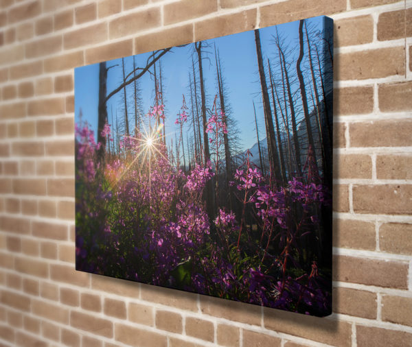 Fireweed Sun Burst Canvas