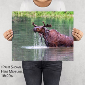 Moose Drool Lunch Photo Print